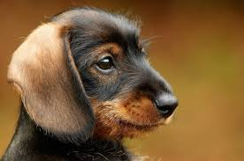 cute puppies for sale 2014. Brilliant Sale Cute Puppies For Sale To For 2014 S