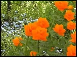 Зима весна лето осень реферат batxako s diary Зима весна лето осень реферат