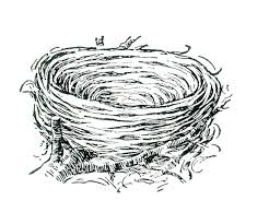 Bird Nest Coloring Page Baby Tropical Pages Of Birds Truyendichinfo