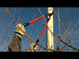How To Prune A Fruit Tree  Fruit Trees Gardens And YardsPruning Fruit Trees Video