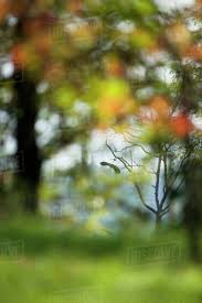 hd outdoor backgrounds. Plain Outdoor Blurred Outdoor Scene With Bird Flying In Background In Hd Outdoor Backgrounds