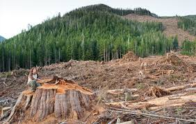 Bc Liberal Govt Mulls Logging Old Growth Forests The Common Sense
