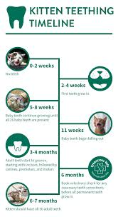 Kitten Teeth Chart Kitten Teething Greencross Vets