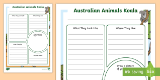 Australian Animals Koala Information Report Writing Template