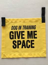 Dog In Training Vest — Wizard of Dogs