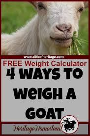 Goat Weight Chart Goat Weight 4 Easy Ways To Weigh