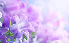 Free download Purple Flowers Background ...