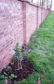 Small Picture Evergreen Climbing Plants for a Garden Wall Hornby Garden