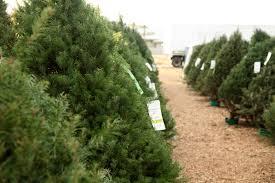 Christmas Tree Farms Near Me Christmas Ideas vI2ZpvZl