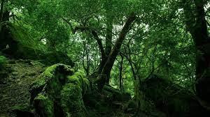 HD Jungle Wallpapers - Top Free HD ...