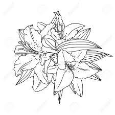 線画ユリの花と葉手描きの背景イラスト