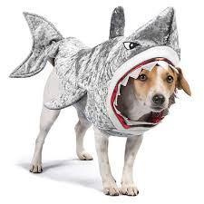 Thrills And Chills For Petsmart Silver Shark Soft