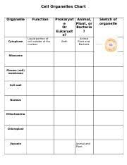 Cell Organelle Chart Cell Organelles Chart Cell Organelles Chart Organelle