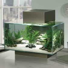 modern kitchen fish tank idea