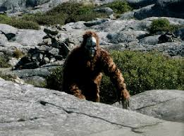 Chattanooga In Free Area Dozen Press Spotted Two Times Bigfoot