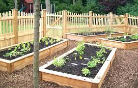 small vegetable garden ideas south africa uk on a budget simple outdoor big advantages decorating charming