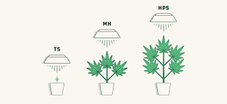Pot Plant Light Cycle How To Select The Best Lights For Growing Weed 2020