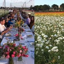 Flower field sunset Mountain The Flower Fields At Carlsbad Ranchr Private Dinner In The Flower Fields Was Spectaclar At Tripadvisor Private Dinner In The Flower Fields Was Spectaclar At Sunset