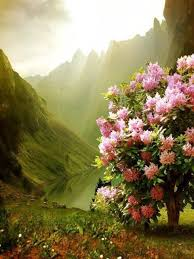 goodmorning scenery nature pin picpic twitter 3jrnrkonnu