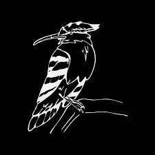 手描きの鉛筆のグラフィックヤツガシラサイチョウ鳥彫刻ステンシル