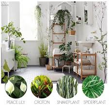 there are a number of low maintenance indoor bathroom plants that thrive in the humid best low light office plants