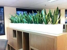 modern office plants. Modern Office Plants Red Potted E Stylish And Desk.  Desk Modern Office Plants E