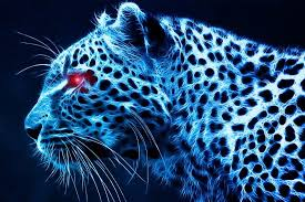 photos leopard wallpapers hd desktop wallpapers high definition monitor free amazing background photos artwork