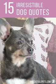 Irresistible Dog Quotes Irresistible Pets