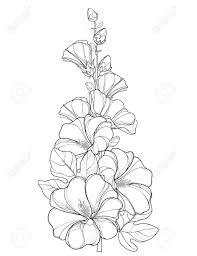 白い背景で隔離の葉や芽幹葵花概要アレセア バラ色の束します夏デザインと塗り絵の華やかな葵と輪郭のス