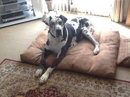 image of dog bed memory foam design