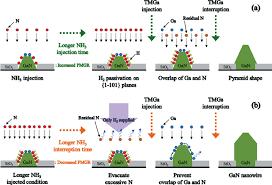 schematic growth model of gan nanowire arrays following nh 3 steps schematic growth model of gan nanowire arrays following nh 3 steps a longer