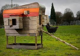 john wright modern chicken coop