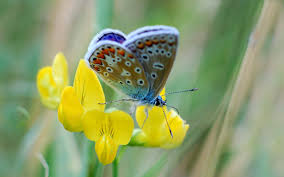 erfly on a yellow flower hd s and birds wallpaper free