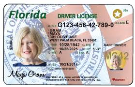 Constitutional Mature Palm Beach Tax Collector County Drivers Serving