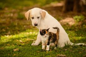 cute kittens and puppies wallpaper. Perfect Kittens Kitten And Puppy Wallpapers For Cute Kittens Puppies Wallpaper S