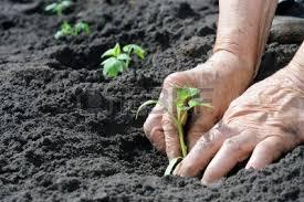 Resultado de imagen de imagen manos plantando semillas sin derechos de autor