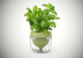 Hydroponics Herb Garden Kitchen Kitchen Beautiful Green Fresh Basil For Hydroponic Kitchen Garden
