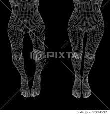 女性の体 O脚と美脚 ワイヤーフレーム Perming3dcg イラスト素材 素材の