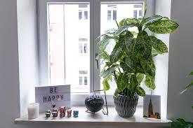 Fensterbank Deko Ein Kleiner Dschungel In Unserer Wohnung Josie Loves