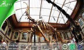 brachiosaurus size life size real brachiosaurus fossil of dinosaur replica