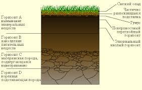 почва Домашние растения Грунт  Реферат на тему почва с картинками