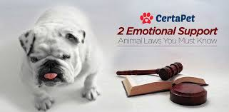 How To Get A Doctors Note For An Emotional Support Dog 2 Ironclad Emotional Support Animal Laws Must Read