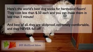 dog socks for hardwood floors get dog booties or shoes for hardwood floors you