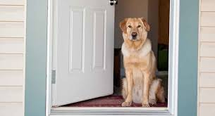 check out the best electronic dog door