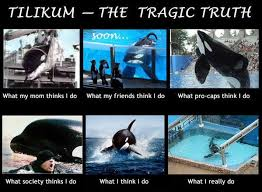 tilikum isolated. Brilliant Isolated Tilly Inside Tilikum Isolated A