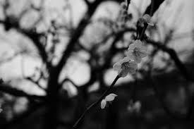 ... autumn, leaf, flower, season, flora, darkness, summilux, leicaq,  summilux1728, q, 1728, ikegamiibaien, twig, black and white, monochrome  photography, ...