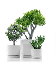 modern office plants. Exciting Modern Office Plants. View By Size: 800x1068 Plants