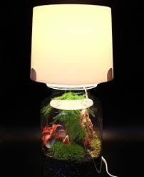 Terrarium Light Terrarium Lamp An Easy Hack For Your Miniature Garden