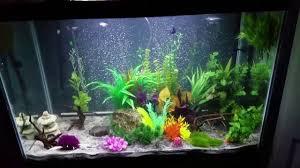 Fish Tank 65 Gallon Aqueon Fish Tank Setup Youtube