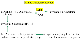 Normal Sgpt Level Chart Sgpt Alt Alanine Aminotransferase Serum Glutamic Pyruvic